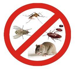 Sanidad Ambiental: Control de plagas y fumigaciones en Vélez Málaga y la Axarquía
